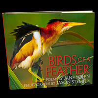 Book, Birds of a Feather by Jane Yolen, Photography by Jason Stemple
