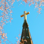 A steeple and flowering tree in the holy city