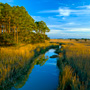Creek and a hummock island in the lowcountry marsh